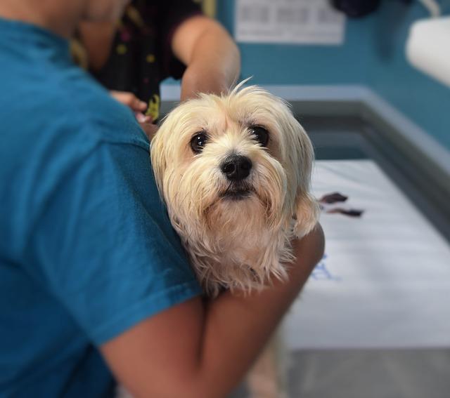 מנוי לחיסונים לכלבים – ככה תחסכו כסף